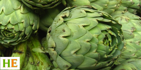 Health Benefits of Eating Artichokes