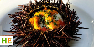 Health benefits of eating sea urchin