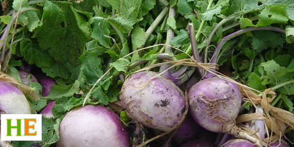 Health Benefits of Eating Turnip Greens