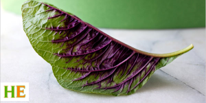 Health benefits of amaranth leaves