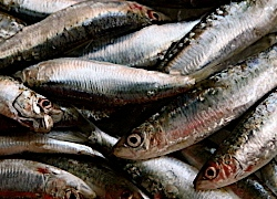 Health benefits of sardines 3