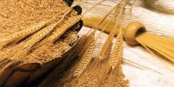 Nutritional value of wheat germ