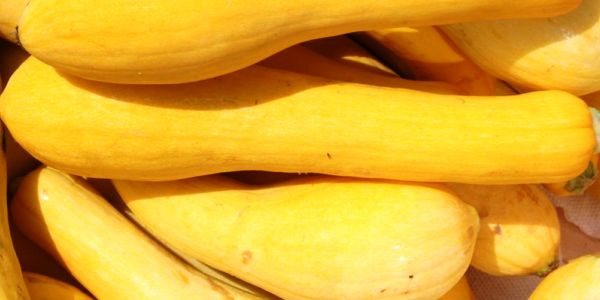 Health benefits of Yellow Squash