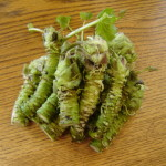 Health benefits of Wasabi