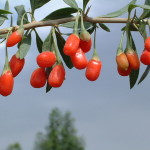 Health Benefits of Goji Berry