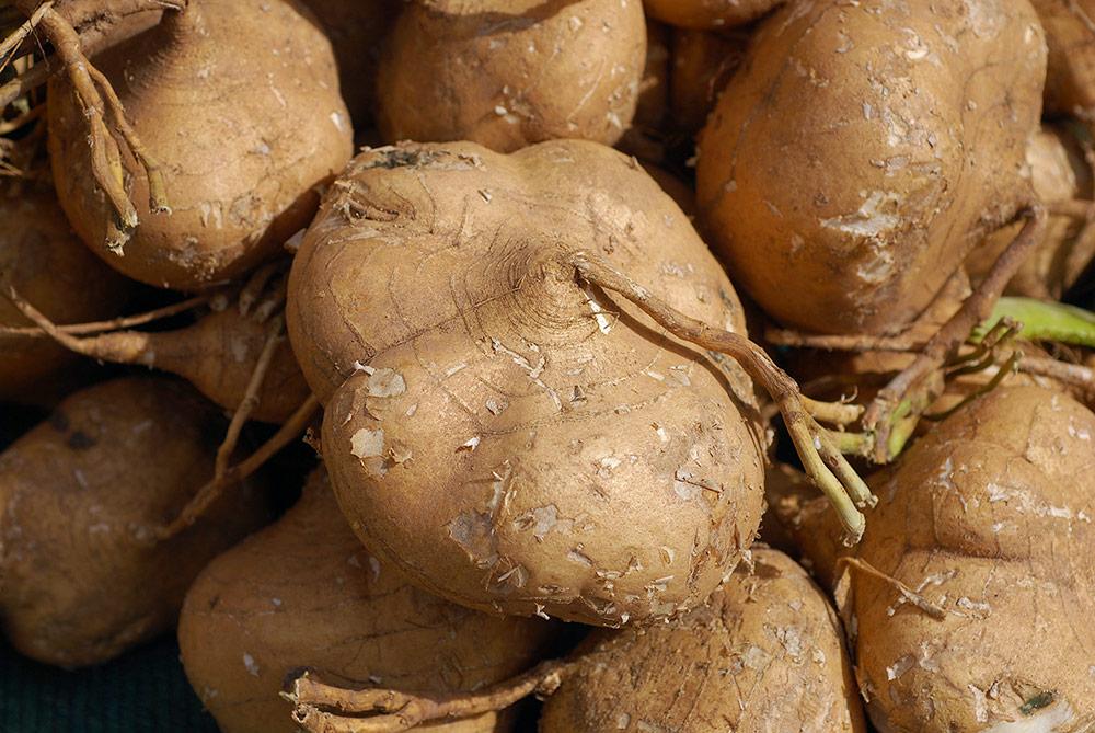 Health Benefits of Eating Jicama - Health Benefits of ...